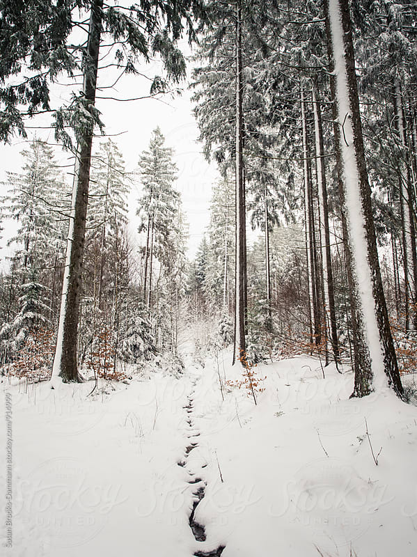 Snowy forest by Susan Brooks-Dammann for Stocksy United