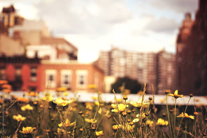 Wildflowers in the City by Vivienne Gucwa for Stocksy United