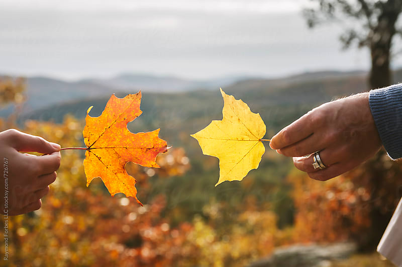 Autumn Foliage Vermont by Raymond Forbes LLC for Stocksy United