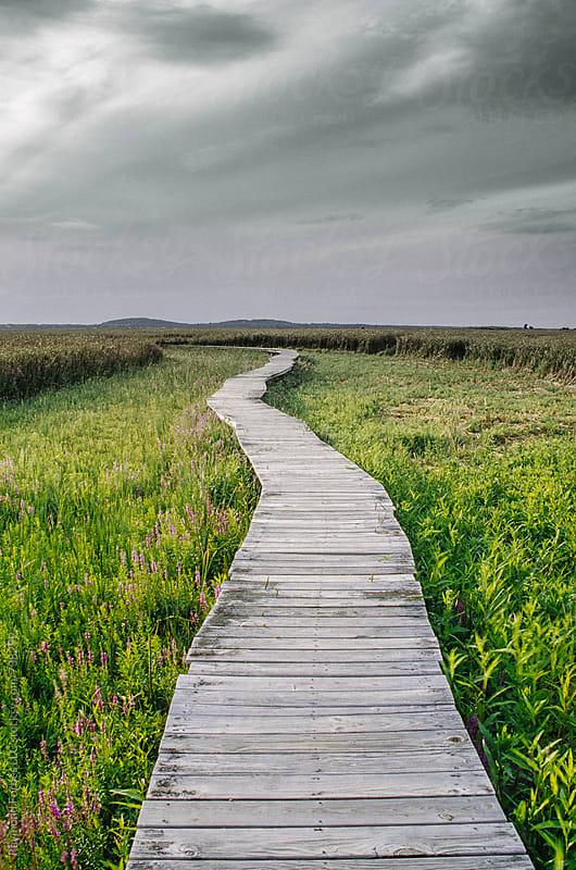 Boardwalk in Marsh by Raymond Forbes LLC for Stocksy United
