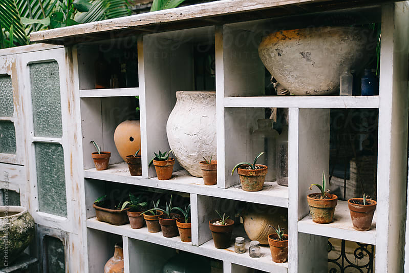 Potted plants on white shelves by Christian Gideon for Stocksy United