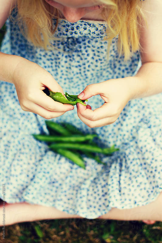A little girl podding fresh peas. by Helen Rushbrook for Stocksy United