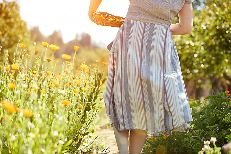 Woman picking calendula flowers at her organic farm  by Trinette Reed for Stocksy United