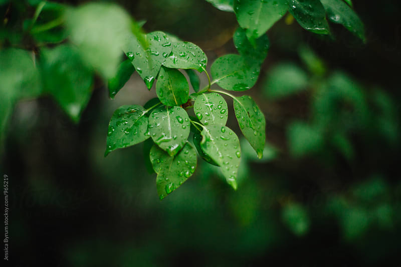 Rainy Day Leaves by Jessica Byrum for Stocksy United