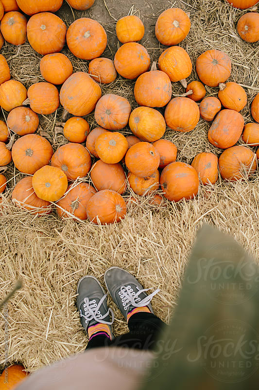 Grey sneakers with pumpkins by Simone Anne for Stocksy United