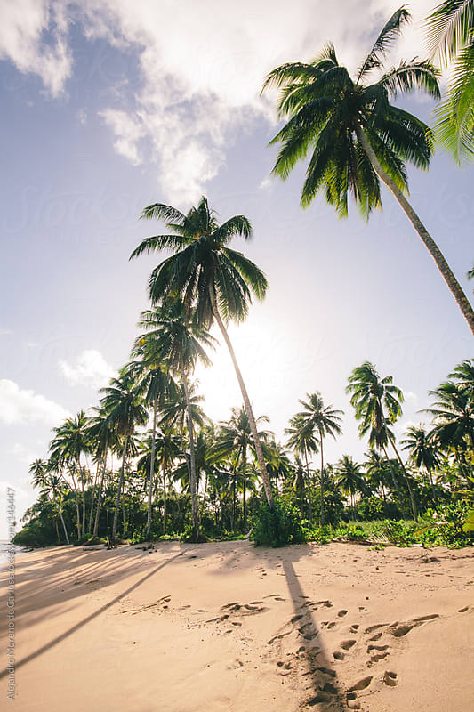 Beach and palm trees on tropical exotic island by Alejandro Moreno de Carlos for Stocksy United