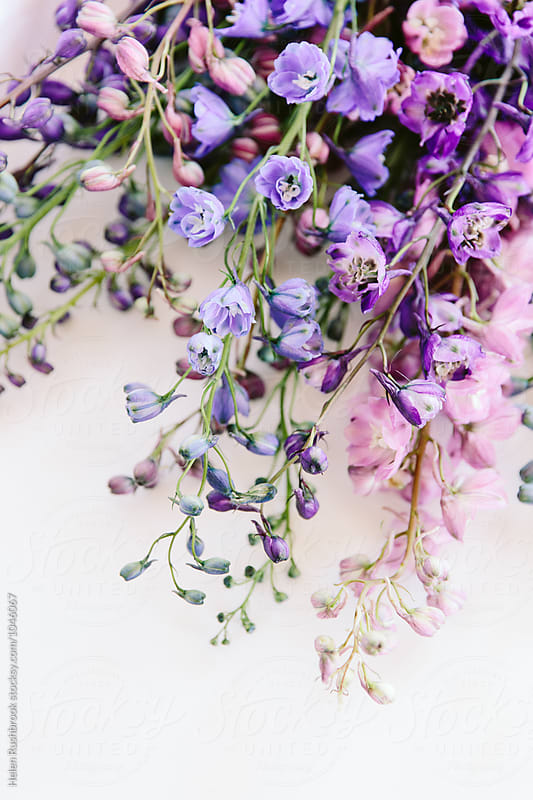 Delphinium flowers by Helen Rushbrook for Stocksy United