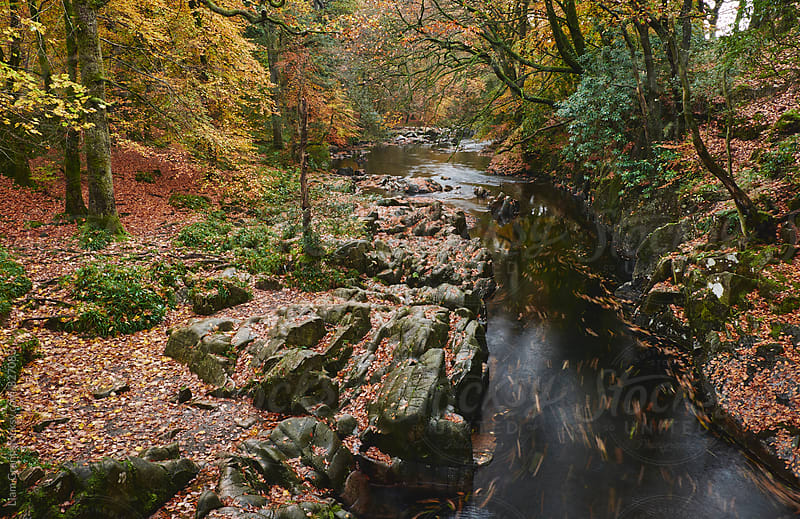 Autumnal trees and leaves along the River Esk. Eskdale, Cumbria, UK. by Liam Grant for Stocksy United