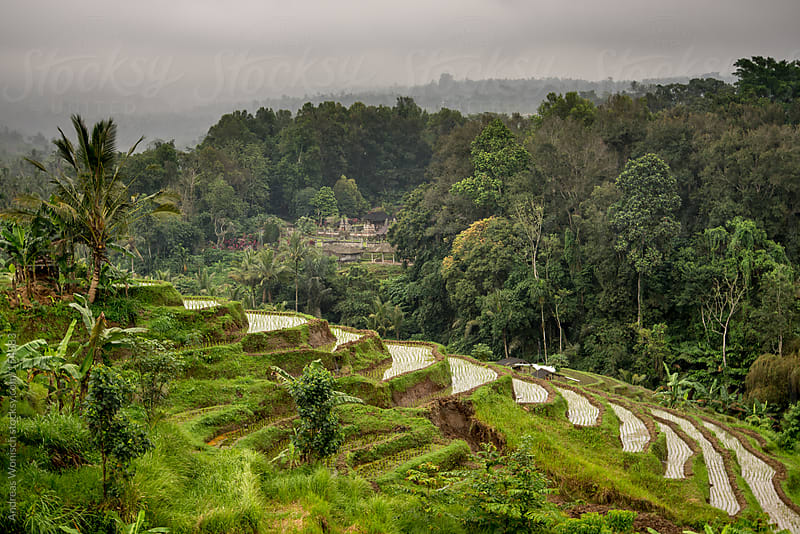 Jatiluwih Rice Terraces and Hindu Temple by Andreas Wonisch for Stocksy United