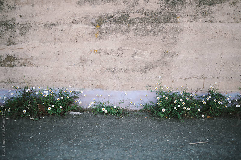 Flowers growing against a concrete wall. by Lucas Saugen for Stocksy United