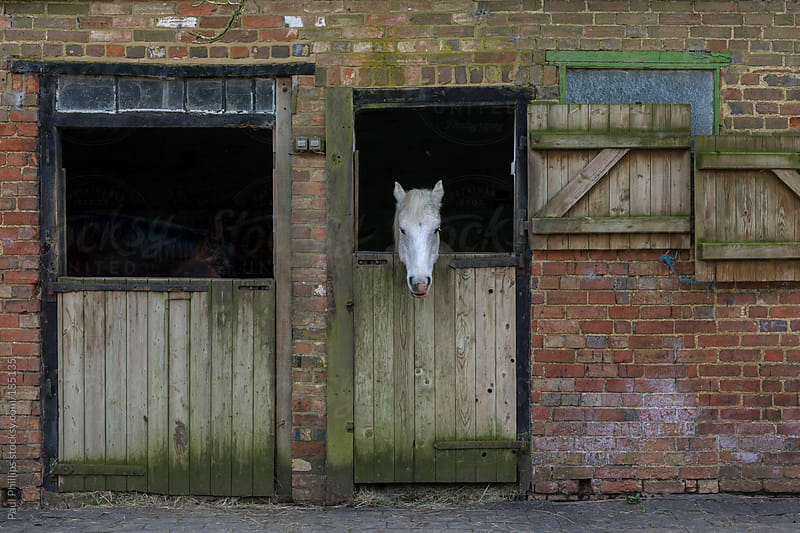 Two stable doors with white head of a horse looking out of one by Paul Phillips for Stocksy United