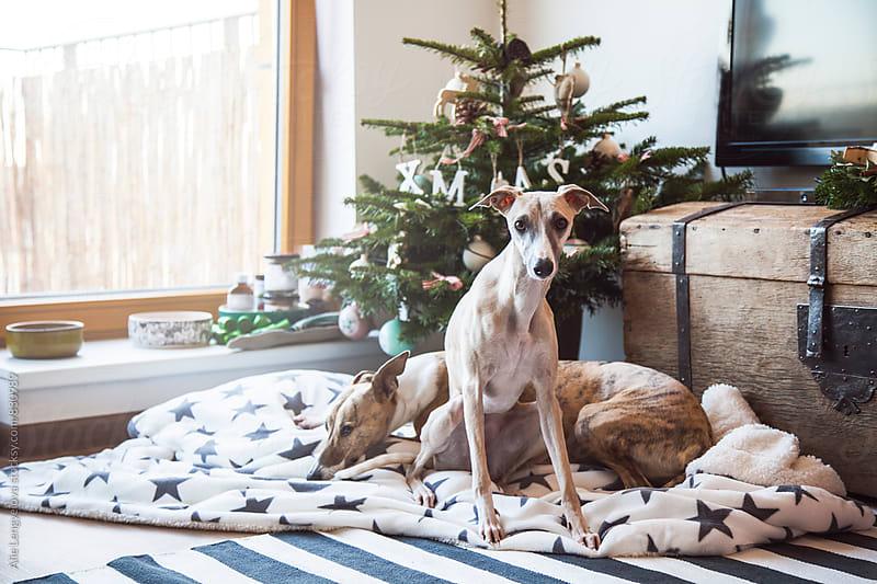 My Loves waiting on Santa by Alie Lengyelova for Stocksy United