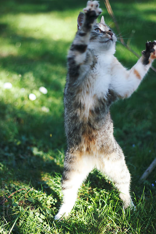 Dancing kitty by Jovana Rikalo for Stocksy United