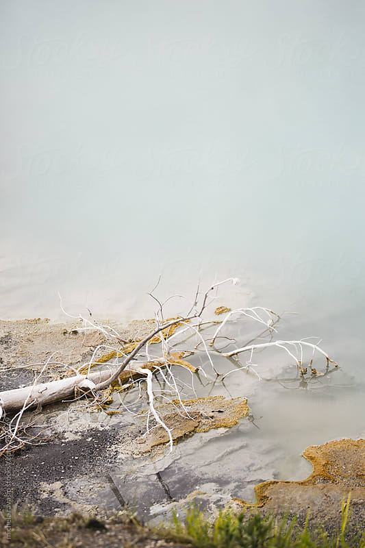 Dead tree branch in a thermal pool at Yellowstone National Park by michela ravasio for Stocksy United