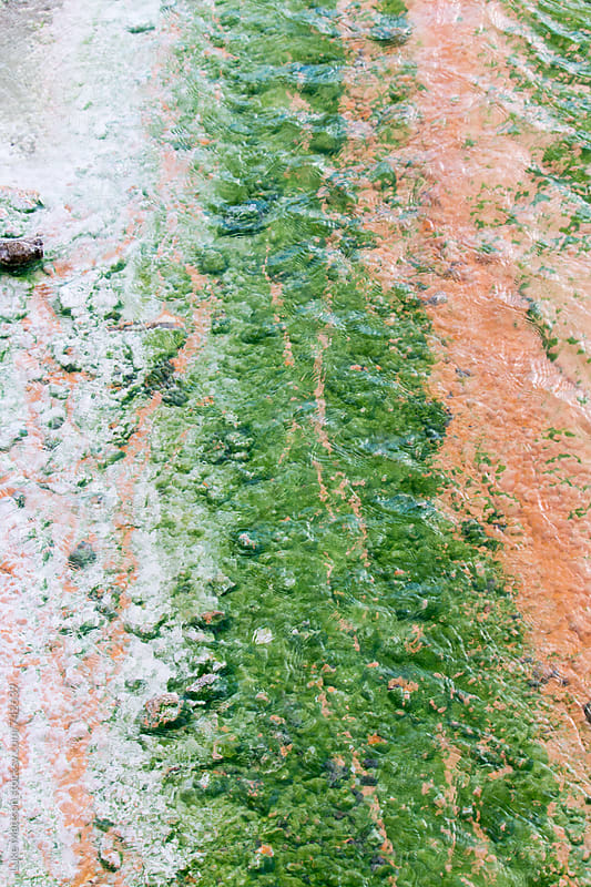 Colorful Green Algae And Orange Bacteria Growing Near Sulfuric Hot Spring by Luke Mattson for Stocksy United