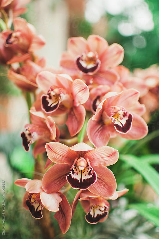 Orchids  by Chelsea Victoria for Stocksy United
