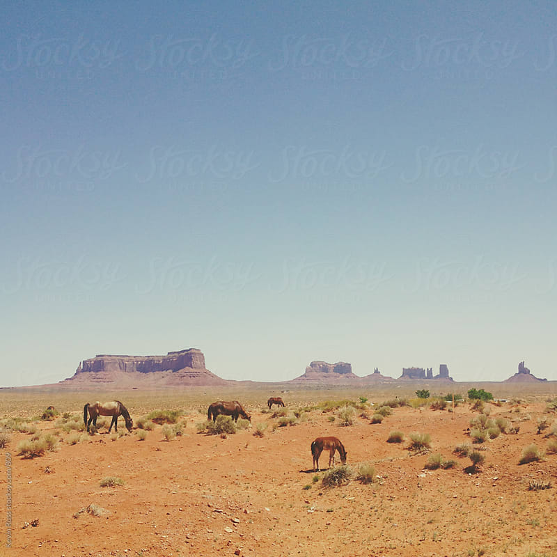 Monument Valley Wild Horses by Kevin Russ for Stocksy United