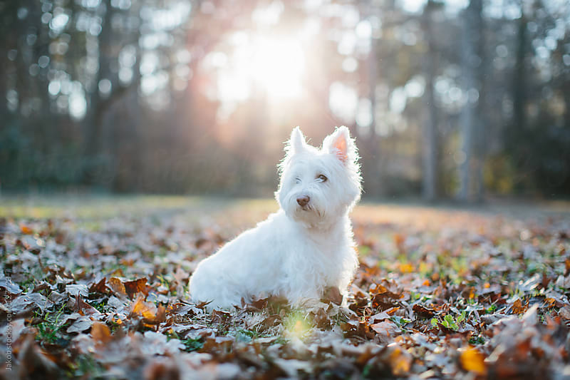 Dog in leafs by Jakob for Stocksy United