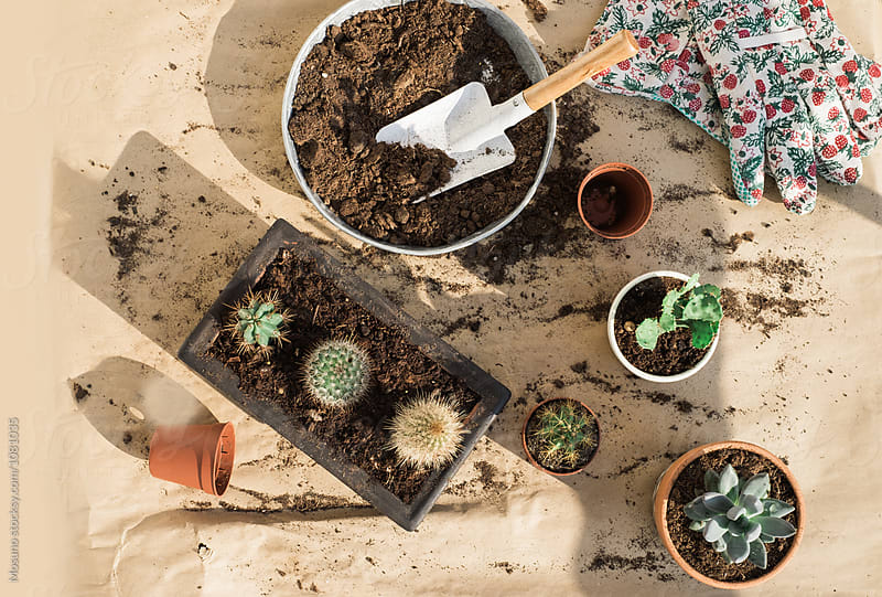 Replanting Cactuses From Above by Mosuno for Stocksy United