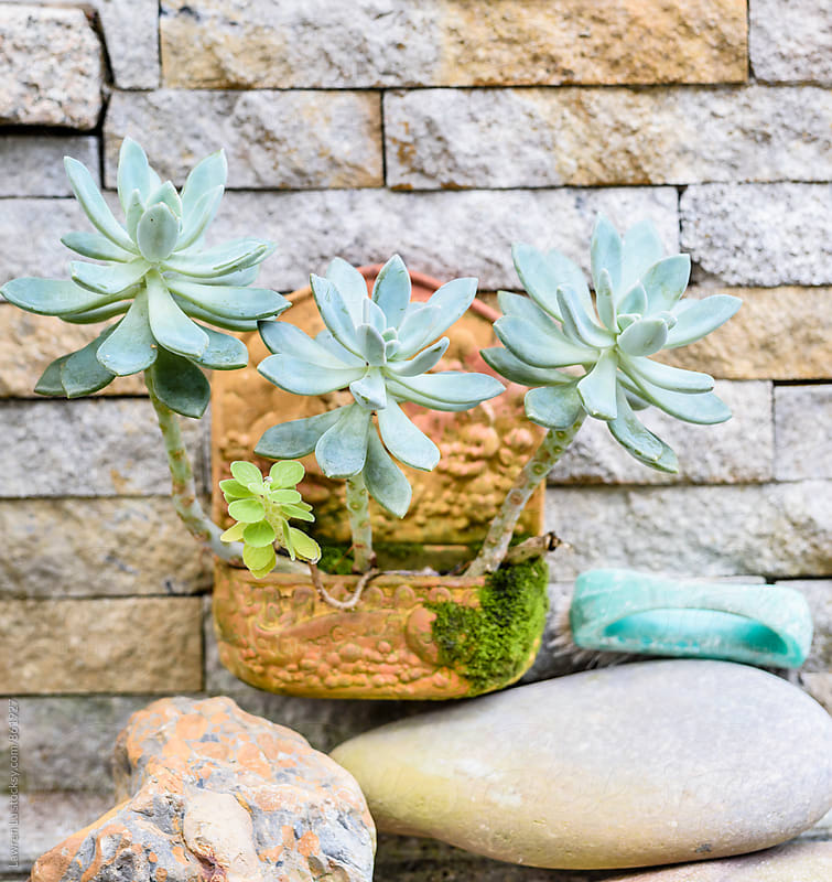 Succulent plant hanging on stone wall by Lawren Lu for Stocksy United