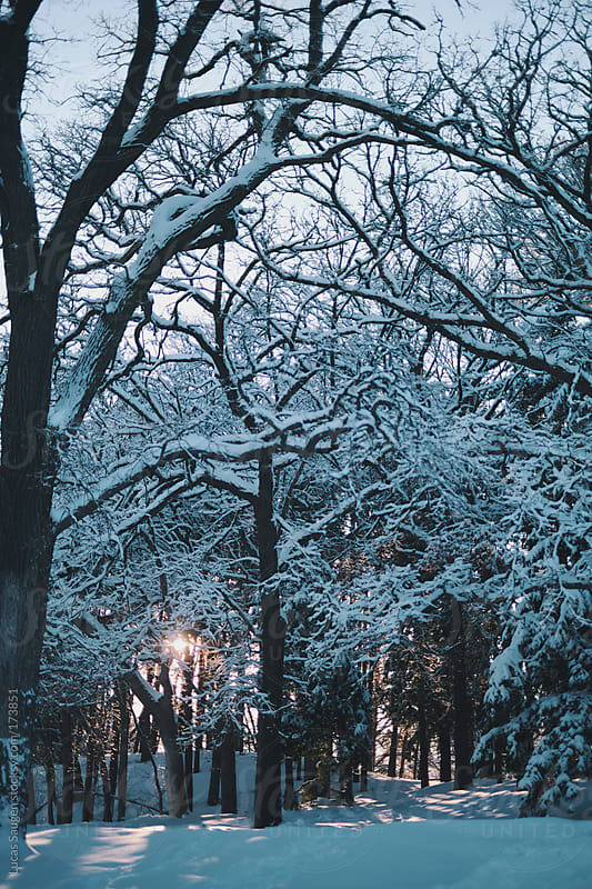 Sunsetting behind snow covered trees by Lucas Saugen for Stocksy United