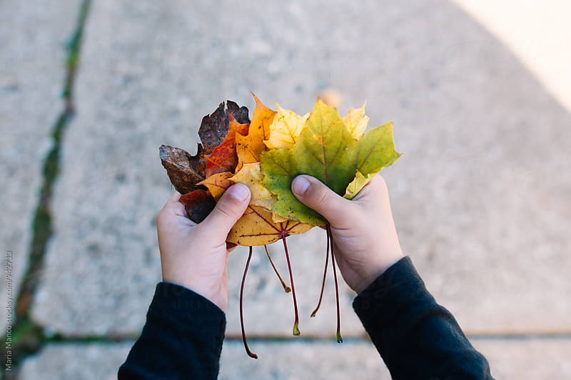 child holding colorful fall leaves by Maria Manco for Stocksy United