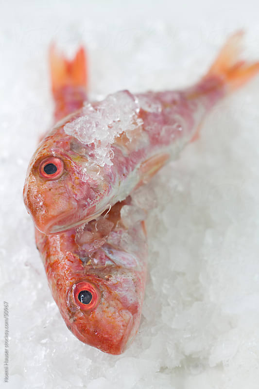Red mullets on ice - close up by Noemi Hauser for Stocksy United