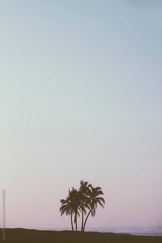 Lone palm trees on a beach by Gary Parker for Stocksy United