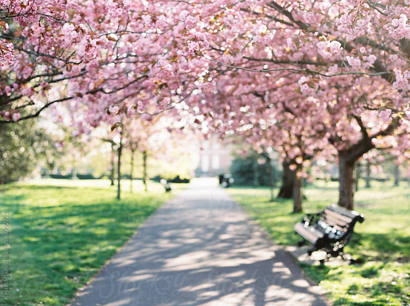 Dreamy image of cherry blossom in a London park by Kirstin Mckee for Stocksy United