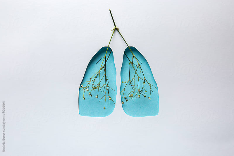 Human lungs shape cut out of paper and arteries and veins symbolized by green stems by Beatrix Boros for Stocksy United