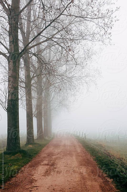 The Long Awaited Fog by Robert-Paul Jansen for Stocksy United