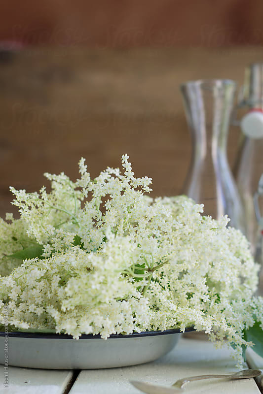 Elderflower by Noemi Hauser for Stocksy United
