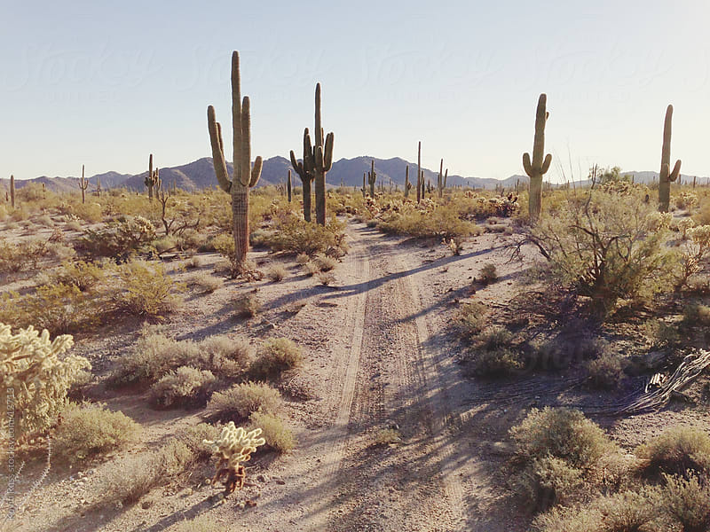 Cactus-Lined Road by Kevin Russ for Stocksy United