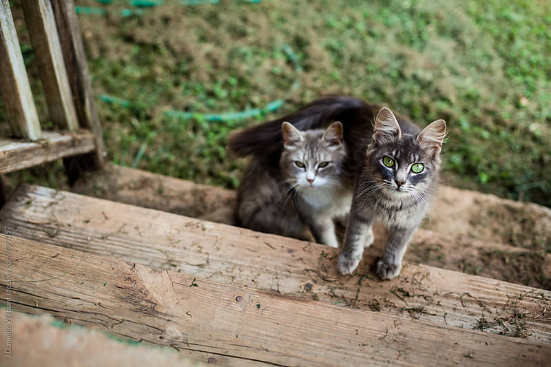 Two kittens climbing stairs by J Danielle Wehunt for Stocksy United