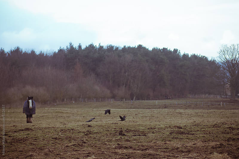 Winter field by Milena Milani for Stocksy United