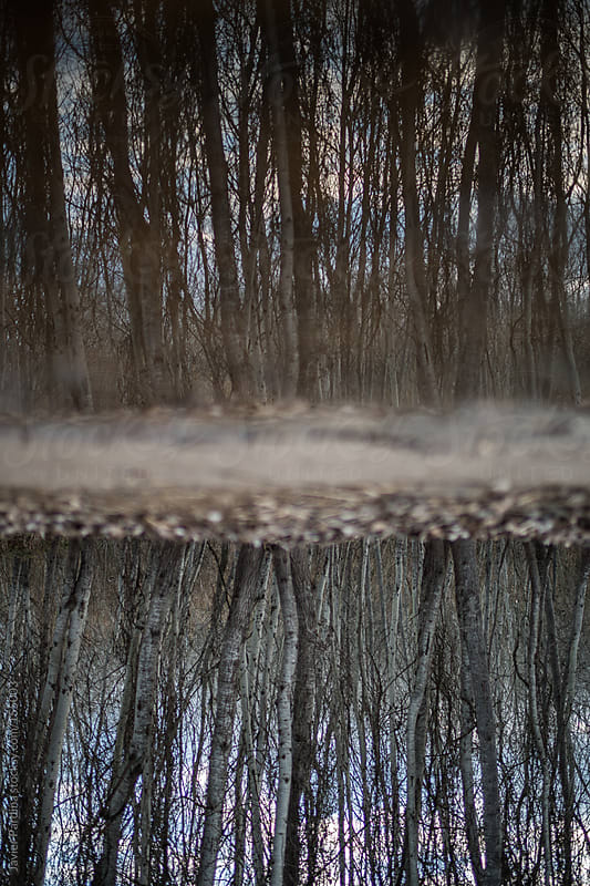 Forest reflected in water by Javier Pardina for Stocksy United