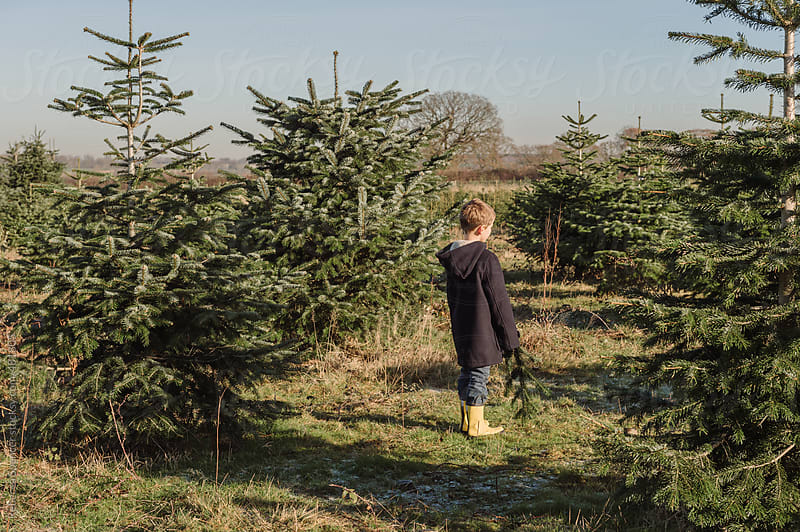 Boy surrounded by Christmas trees to choose from by Rebecca Spencer for Stocksy United