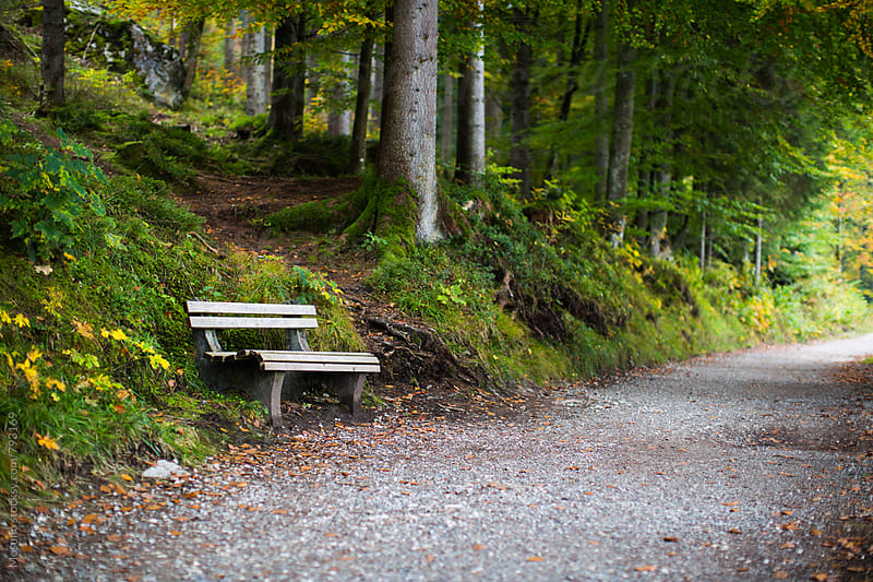 Bench on the Forest Path by Mosuno for Stocksy United