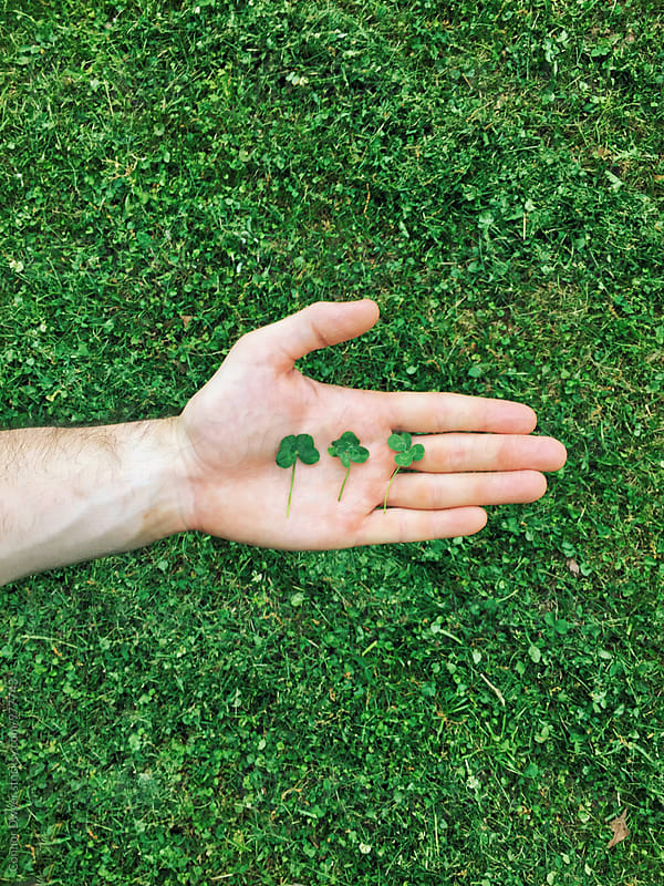 Four leaf clovers by Connor Dwyer for Stocksy United