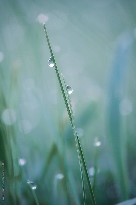Blade of grass by Pixel Stories for Stocksy United