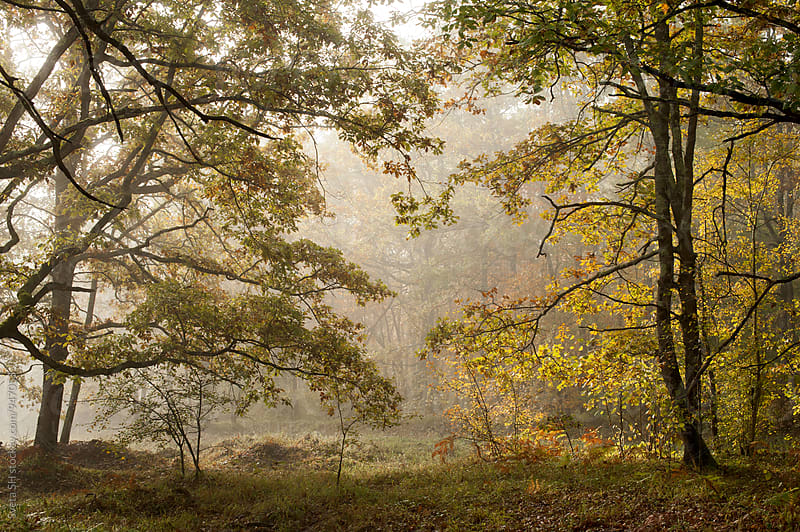 Morning broadleaf forest at the time of the Indian summer. by Sveta SH for Stocksy United