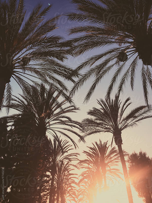 Sunset between palm trees in California by paff for Stocksy United