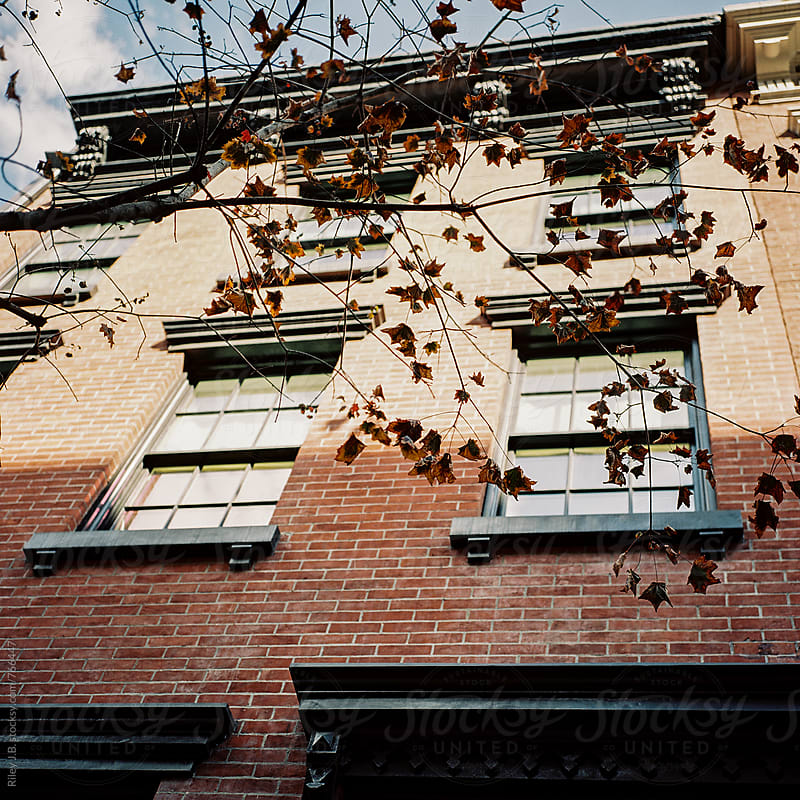 Fall leaves on branches outside a brick house. by Riley Joseph for Stocksy United
