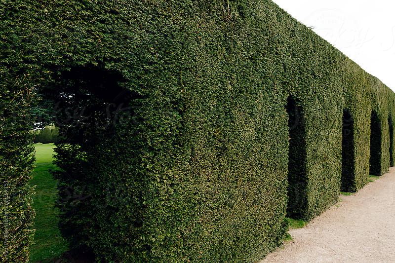 Arched walkway through a hedge by Paul Phillips for Stocksy United