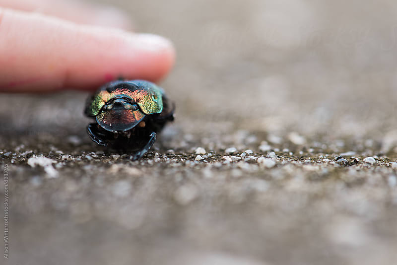 Child Touches A Vivid Beetle by Alison Winterroth for Stocksy United