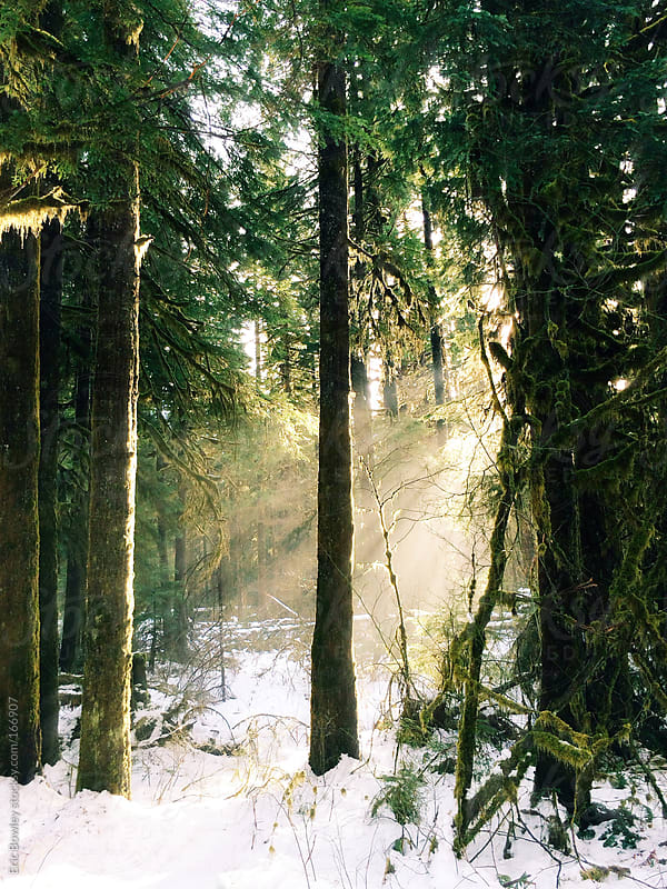 Forest Sun Rays by Eric Bowley for Stocksy United