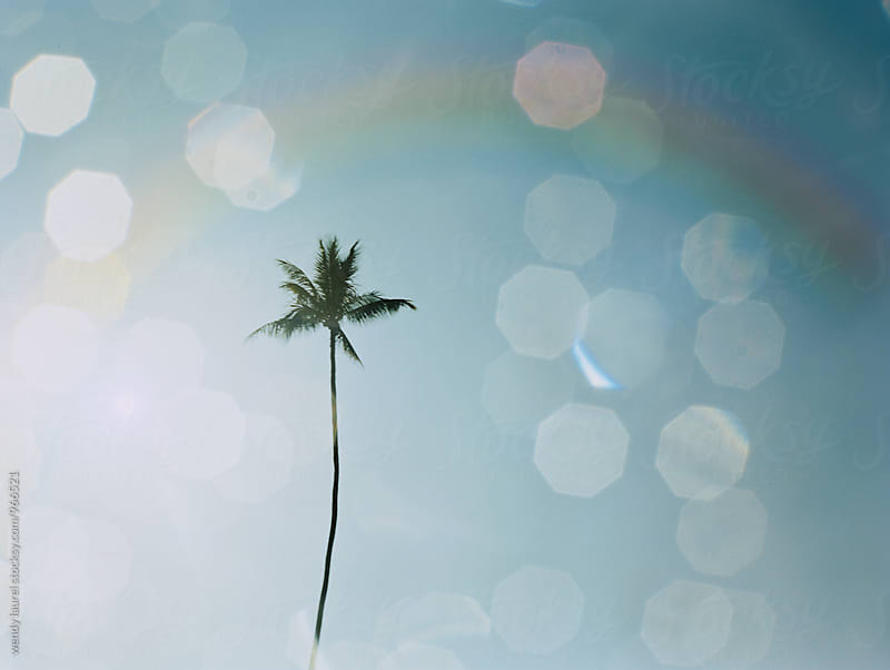 rainbow and water drops with lone palm tree by wendy laurel for Stocksy United
