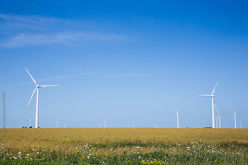 Blue skies, green field and windmills by anya brewley schultheiss for Stocksy United