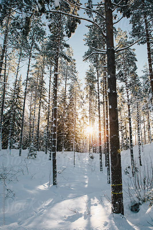 Sun Shining Through Trees in Winter by Stephen Morris for Stocksy United
