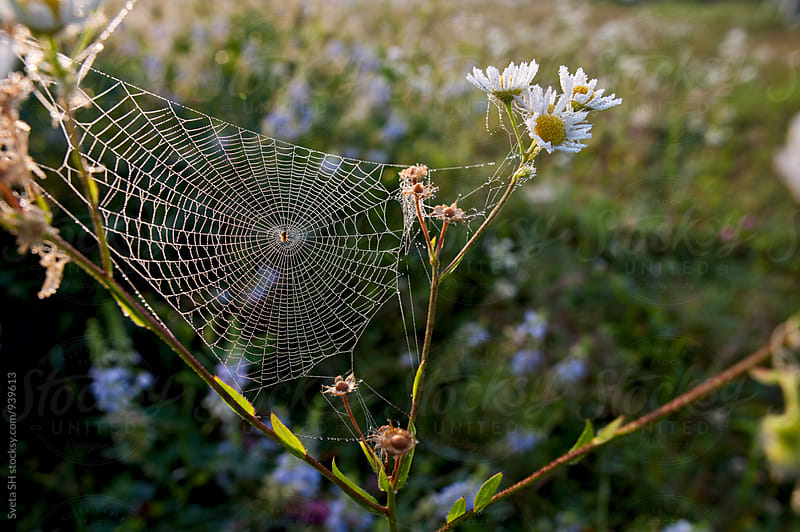 Spider web covered a dew by Svetlana Shchemeleva for Stocksy United